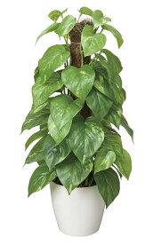 期間限定ポイント10倍/人工観葉植物/光触媒フレッシュポールポトス