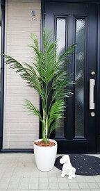 人工観葉植物 アレカパーム1.8M フェイクグリーン インテリアグリーン