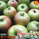 【送料無料】りんご 訳あり 加工用 5kg箱青森 りんご サンつがる 5kg箱 (加工用訳あり)ジュースやお菓子作りに!色づ…