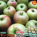 【送料無料】りんご 訳あり 加工用 10kg箱青森 りんご サンつがる 10kg 箱(加工用訳あり)ジュースやお菓子作りに!色…