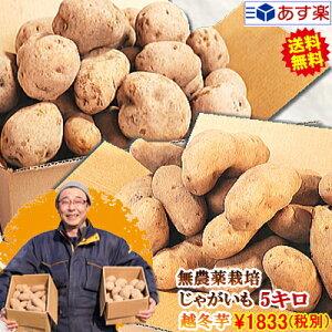 じゃがいも 5kg 送料無料 農薬栽培男爵 メークイン 品種が選べるジャガイモ岩手県軽米町産 無農薬栽培 越冬じゃがいも 5キロじゃがいも 種芋ではありませんちょっぴり規格外 A品B品混合 ジ