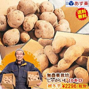 じゃがいも 10kg 無農薬栽培男爵 メークイン 品種が選べるジャガイモ岩手県軽米町産 無農薬栽培 越冬じゃがいも 10キロじゃがいも 種芋ではありませんちょっぴり規格外 A品B品混載 お得な訳