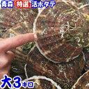 青森 活ほたて 殻付き 大3キロ(約15枚前後)青森 ホタテ 養殖青森『特選』活ほたて 奇跡の海『むつ湾』からホタテ漁…