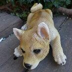 犬の置物柴犬伏せ柴いぬイヌ動物N12920オーナメントガーデンオブジェ庭雑貨ガーデニングガーデンマスコットリアルディスプレィ