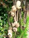 りすの置物 木登りリス3匹セット N11122 動物 オーナメント ガーデン オブジェ 庭 置物 雑貨 インテリア マス…