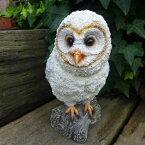 フクロウの置物白ふくろう3765-01鳥とり動物オーナメントオブジェガーデンガーデニング置物縁起物雑貨ナチュラルリアルディスプレィ