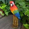 小鳥の置物インコの置物ベニコンゴウインコ8298−00とりトリオブジェ動物オーナメントガーデン庭マスコット雑貨置物小物リアルディスプレィ