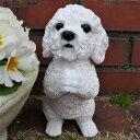 犬の置物 プードルのお願いホワイト 7358HT いぬ イヌ 動物 オーナメント ガーデン インテリア 雑貨 置物 庭 ガーデン…
