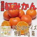 【予約販売】香川産 紅みかん 特選5kg箱(12月より発送!)お歳暮ギフトに♪