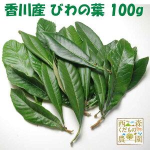 【送料無料】香川産 びわの葉 100g(1袋 生葉15-25枚)♪[国産 無農薬](枇杷葉・びわ生葉)温灸・湿布・びわエキス・びわ療法