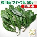 香川産 びわの葉【お試し品・送料無料】(1袋50g 生葉約10枚)♪温灸・湿布・びわエキス・びわ療法