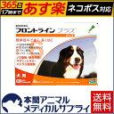 【送料無料】犬用 フロントラインプラス XL (40kg〜60kg) 1箱 6本入 6ピペット【動物用医薬品】【365日あす楽】