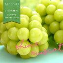 【基本送料無料】 シャインマスカット 約1.2キロ 大型 2房 ブドウ 葡萄 とっても甘い!