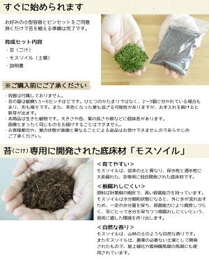 苔(コケ)モスソイル付属育成キットほそばおきな苔インテリア