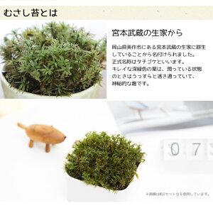 苔(コケ)育成キットむさし苔専用培養土モスソイル付属インテリア