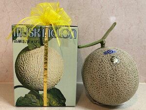 【お中元ギフト】アールスメロン 高知県産メロン 高級メロン 1玉 フルーツ 贈答品 めろん ギフト 贈答用