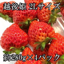 【越後姫】いちご 苺 新潟産ブランドいちご 大粒 2Lサイズ 約280グラム×4パック 送料無料