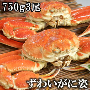 かにみそたっぷりボイルズワイガニ(ずわいがに姿)750g×3尾/蟹【ギフト】