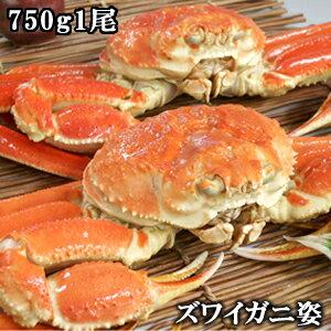 かにみそたっぷり!ボイルズワイガニ(ずわいがに姿) 750g×1尾/蟹【ギフト】