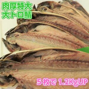 【w_fddl】特大肉厚大トロ鯖5枚 天然無添加自然食品 さば一夜干し 美味しいとろサバ さけのさかな 酒の肴 美味しい干物 ご飯のお供 鯖 BBQ用 ギフト用包装いたします。