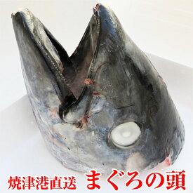 静岡県 焼津港直送 まぐろの頭 丸ごと1匹分 2kgUP マグロ 鮪 パーティやBBQなど 丸焼きで インスタ映え