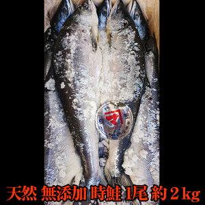 【送料無料】天然 無添加 時鮭 1尾 約2kg 化粧箱入 時不知(ときしらず)身の締まりがいい天然無添加さけ 天然北洋産時鮭 お茶漬け お歳暮 ギフト お正月