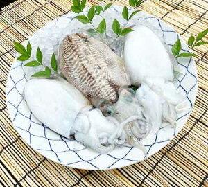 ハリイカ 刺身用 1kg 真空冷凍 日生産 瀬戸内海 コウイカ 海鮮 旬の魚 新鮮