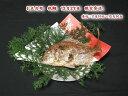 お正月用【魚秀の祝鯛】12月29日限定発送天然・明石鯛・生の時900g