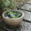 Water lily bowl killifish bowl killifish bowl goldfish bowl earthenware large size killifish biotope killifish bowl water bowl Shigaraki ware lotus bowl water consecutive bowl washbowl water tank stylish su-0140 shopping marathon