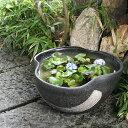12号黄釉ハケメ三方曲げ水鉢 信楽焼すいれん鉢 メダカ鉢、金魚鉢にも最適 睡蓮鉢 陶器スイレン鉢 ハス鉢 はす鉢 めだか鉢 鉢 陶器 水連…