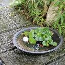 信楽焼 15号黒ハケメ浅型水鉢 メダカ鉢、金魚鉢にも最適 睡蓮鉢 陶器スイレン鉢 ハス鉢 はす鉢 めだか鉢 鉢 陶器 水連…
