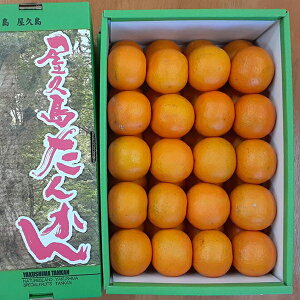 屋久島直送 屋久島たんかん 5kg×1箱 Mサイズ 最上品(赤秀)