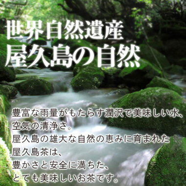 豊富な雨量がもたらす潤沢でおいしい水、空気の清浄さ。屋久島の大自然に育まれたお茶です。