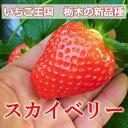 栃木県産いちごスカイベリー 1箱約300g(6〜9個)×2パック【送料無料】【期間限定】【産地直送】【RCP】日時指定は出来ません。02P07Feb16