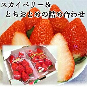 いちご 送料無料 栃木県産スカイベリー とちおとめ 詰合わせセット1箱 300g×2パック 期間限定 産地直送日時指定は出来ません。大粒 高級 プレゼント フルーツ 贈り物 ホワイトデー ギフト ひ