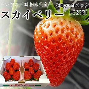 いちご 大粒 スカイベリー 送料無料 栃木県産2箱 約300g(6〜9個)×4パック期間限定 産地直送 日時指定は出来ません。大粒 高級 プレゼント フルーツ 贈り物 ホワイトデー ギフト ひなまつり