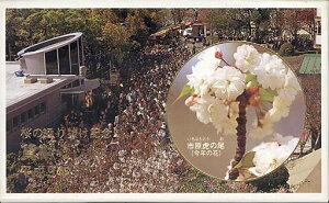 【平成9年】平成9年 桜の通り抜け 貨幣セット 平成9年(1997年)ミントセット【桜の通り抜け】