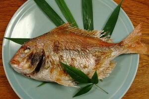 料亭の味をご家庭へお届け致します豊後水道大分県産 天然鯛の姿焼き一尾3〜4人前サイズ【楽ギフ_のし】