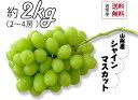 【送料無料】山形県産シャインマスカット(約2kg2〜4房)