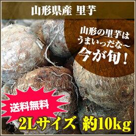 ★山形の里芋はうまいっだな~★山形県産 里芋 2Lサイズ 10kg