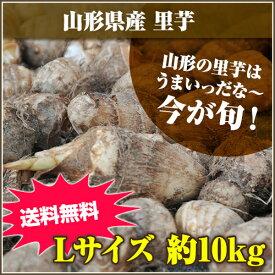 ★山形の里芋はうまいっだな~★山形県産 里芋 Lサイズ 10kg