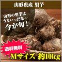 ★山形の里芋はうまいっだな~★山形県産 里芋 Mサイズ 10kg