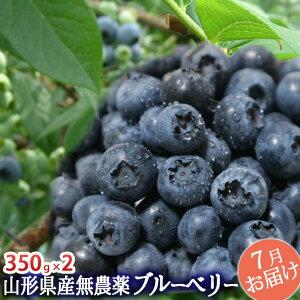完熟 大粒 ブルーベリー 生700g(350g×2)山形県産 無農薬 お中元 夏ギフト