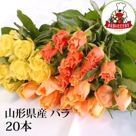 バラ 20本 山形県 寒河江市産 大沼バラ園 切り花 生産者直送のため同梱不可 送料無料 ピンク系 赤系 オレンジ黄色系 から選べます