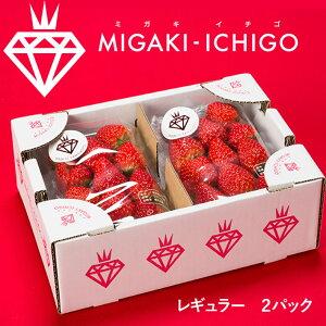 母の日ギフト いちご ミガキイチゴ レギュラー 2パック 1箱 送料無料