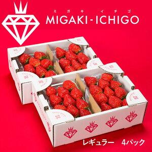 母の日 ギフト いちご ミガキイチゴ レギュラー 4パック 1箱 送料無料