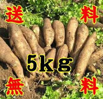 Yacon raw potato fruits like 5 kg * additional shipping, Northeast takes 300 yen and Hokkaido-Okinawa 500 yen * (10000917)