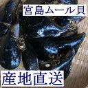 【広島直送】広島湾産「天然 活きムール貝 3kg(宮島ムール)」