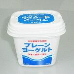 九州乳業『生きている乳酸菌プレーンヨーグルト』500g
