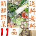 山口・九州産【送料無料】『新鮮野菜の詰め合わせ11種類』(白菜・ほうれん草・ネギ・キャベツ他)